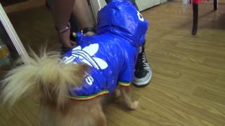 Unboxing de ropa de perro con aliexpress 10