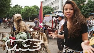 Dining on Dogs in Yulin: VICE Reports (Full Length) thumbnail