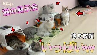 三重県で猫がいっぱい触れ合える場所に行ってみた!【猫の展示会】