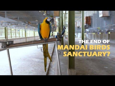 The End Of Mandai Birds Sanctuary? | CNA Insider