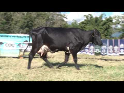 LOTE 6   198