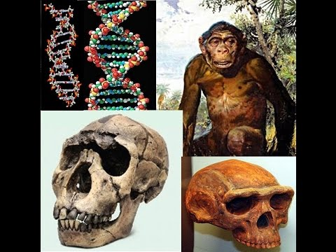 Homo Erectus, Evolution Debunked - Hugh Ross