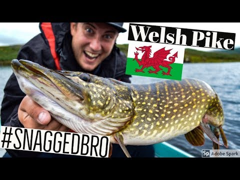 PIKE FISHING With Lures - Trawsfynydd - Wales