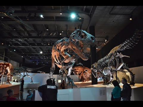 Top 14 Best Museums in Houston - Travel Texas