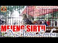 Mejeng Cipoh Sirtu Di Arena Lomba  Mp3 - Mp4 Download