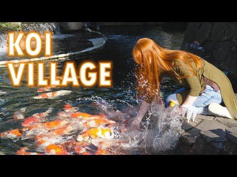 Koi Village & the mountains where koi come from