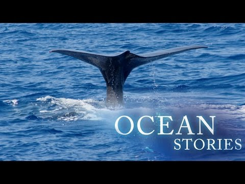 Ocean Stories 1 - The Giant and The Phantom