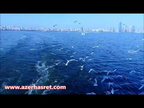 Caspian Seagulls. Baku, Azerbaijan
