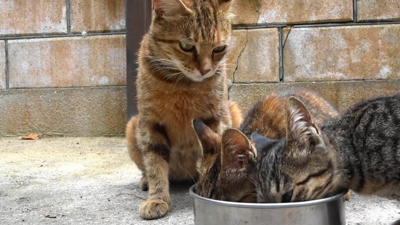 野良猫親子家に居ついて一年経ち...