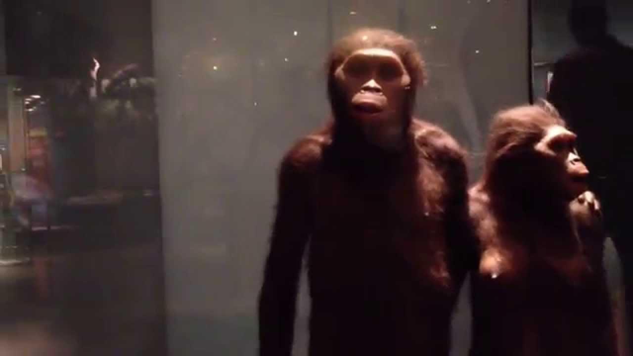 LA EVOLUCION DEL HOMBRE EXPLICADA MUSEO DE HISTORIA NATURAL NY 6 - YouTube