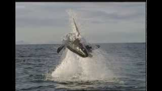 Discovery Channel Promo - Animal Planet - TV Promo
