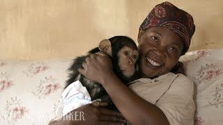 A Woman and Her Chimpanzees Heal Together After Trauma | The New Yorker
