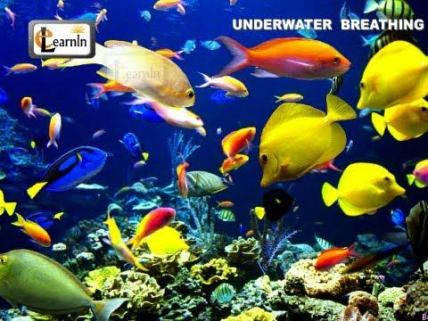 Underwater Breathing In Animals - Elementary Science