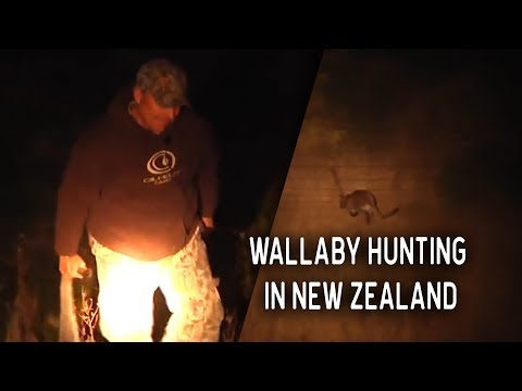 Wild Wallaby Hunting In New Zealand!