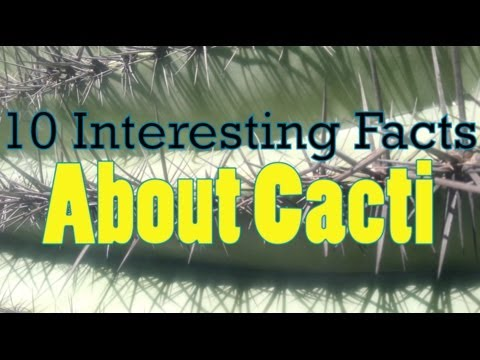 10 Interesting Facts About Cacti, Cactus & Other Desert Plants ...