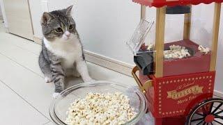 目の前でポップコーンが弾けたら猫がこうなりました笑
