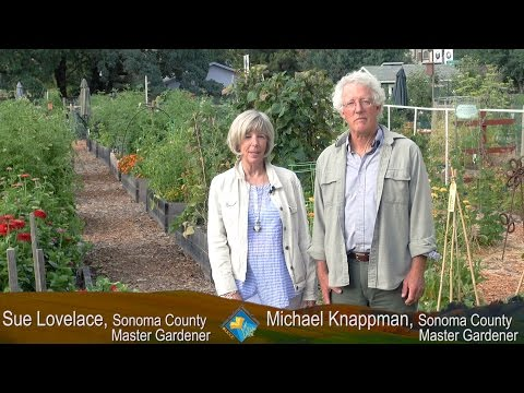 UCCE Sonoma County Master Gardeners - Growing a Thriving Vegetable Garden with Less Water