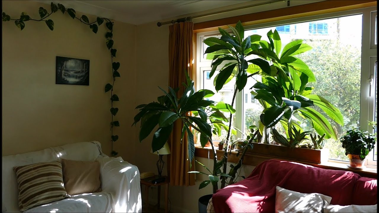 How to make your house into a jungle youtube - Make your house a home ...