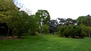 アキーラさんお薦め!イギリス・ロンドン・キューガーデン1,Kew-garden,London