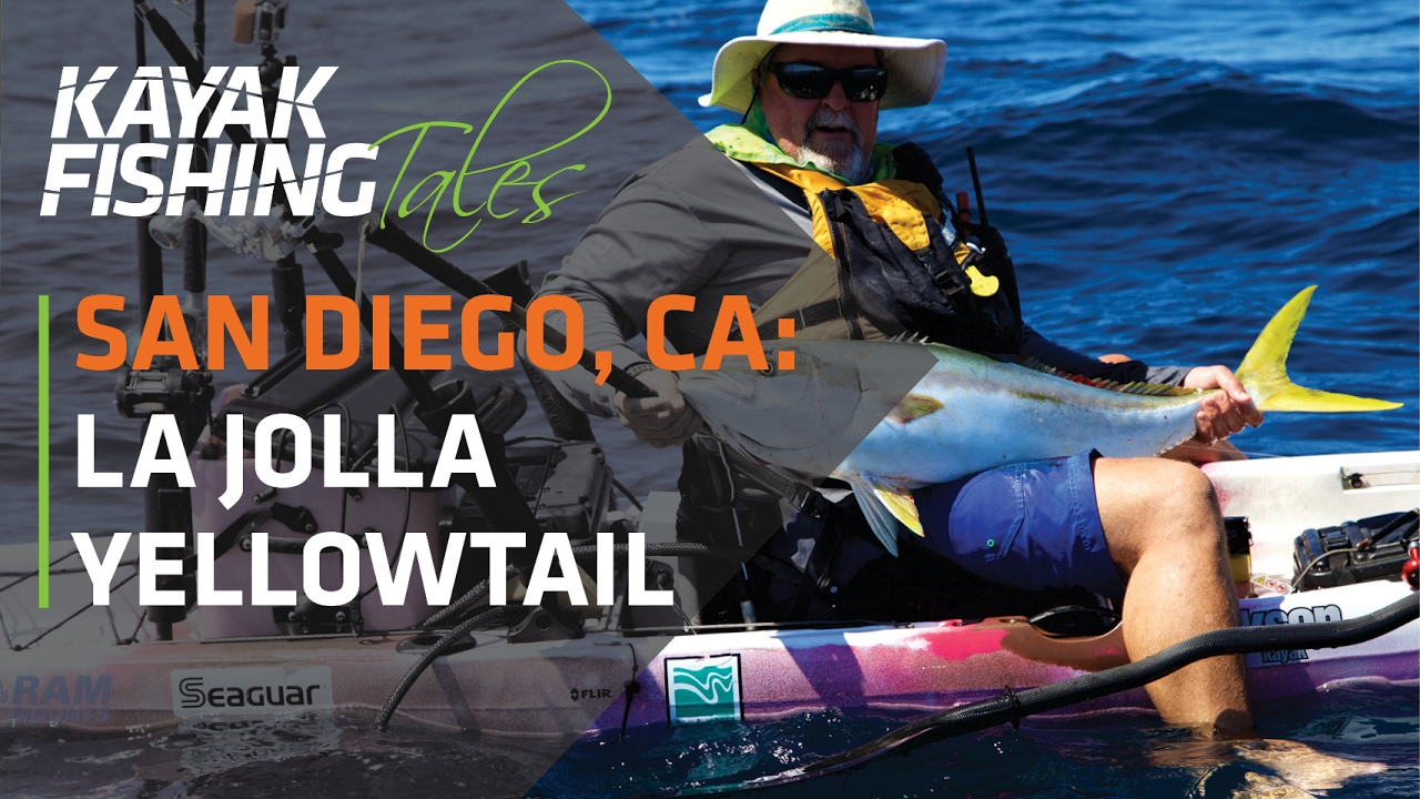 Kayak fish for yellowtail in la jolla san diego for Fish count san diego