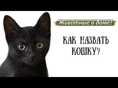 Имена, клички для кошек.