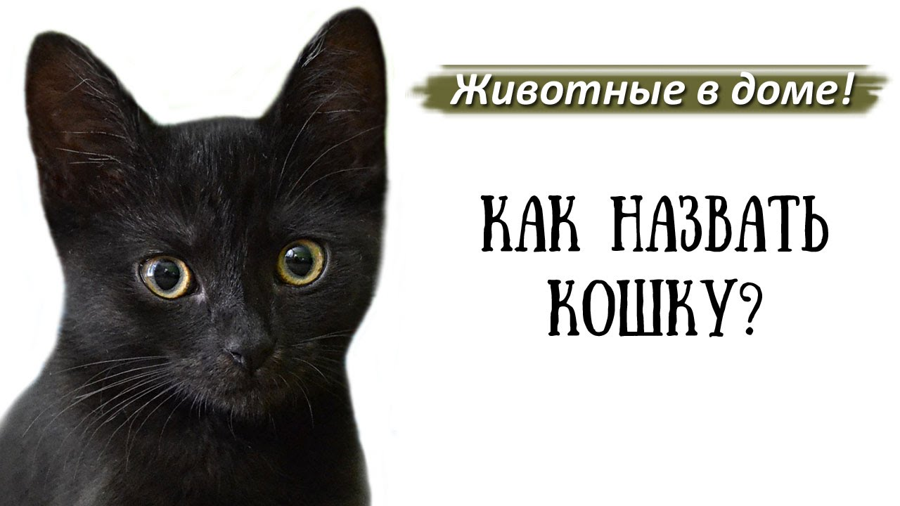 Смешные имена коту мальчику