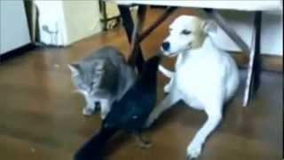 Смешные животные и приколы смешных животных