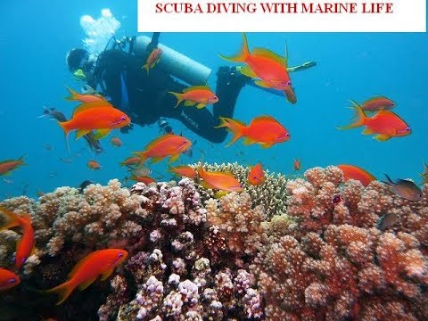 SCUBA DIVING UNDER SEA BED WITH MARINE LIFE