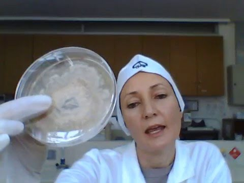Fungi and mycotoxins in food