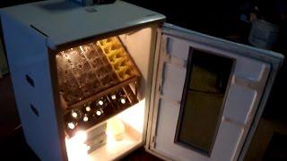 Inkubator automatyczny do wylęgu jaj - domowej roboty