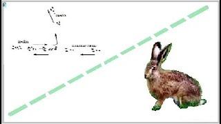 О повадках зайца и охоте на него. About the habits of the hare