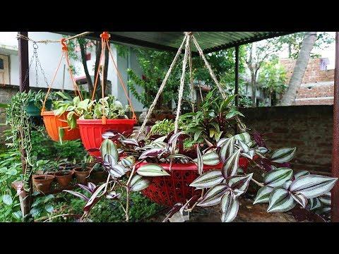 Garden Decoration बगीचे की सजावट Hanging Basket   Hindi / Urdu