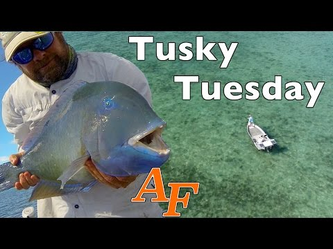 Tusky Tuesday Fly fishing with Phantom4 Drone Andy's Fish Video EP.335