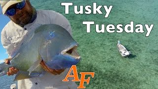 Tusky Tuesday Fly fishing with Phantom4 Drone Andy's Fish Video EP.335(Simon and I go Tusk fishing with flyrods. This video has some interesting arial footage taken with Simon's Phantom4 drone. Soon I will be filming my fishing ..., 2016-07-18T07:58:43.000Z)