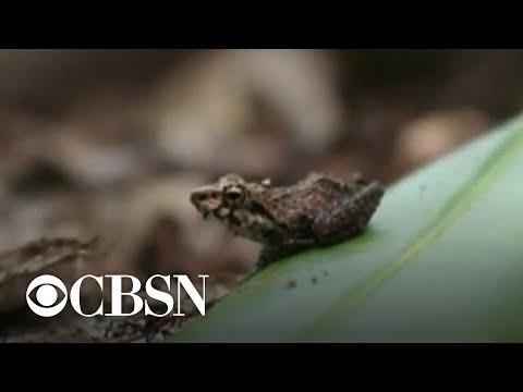 One million species facing extinction, U.N. report warns