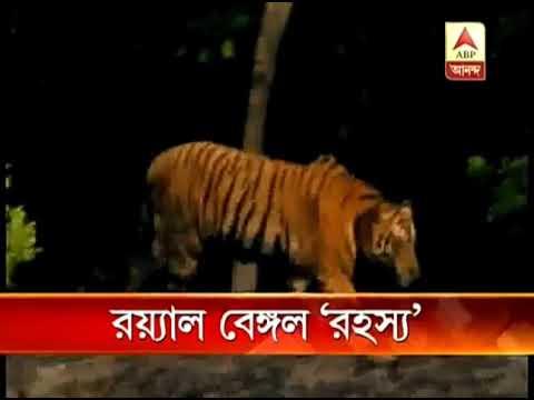 The Sundarban Tiger