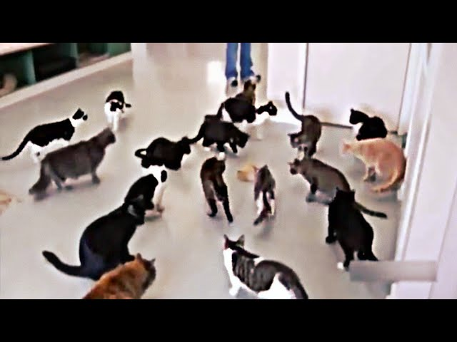 CAT FUNNY VIDEOS