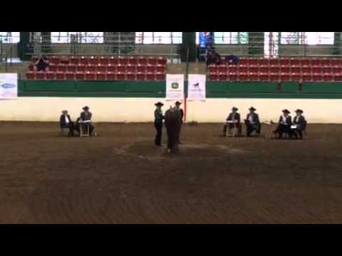 A Judges Perspective: 2016 Select Showmanship World Champion from YouTube · High Definition · Duration:  1 minutes 57 seconds  · 13.000+ views · uploaded on 31.08.2016 · uploaded by AQHA Video