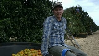 Morgan Spurlock becomes a fruit picker