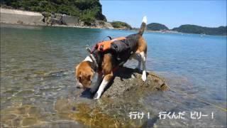 兵庫県豊岡市、竹野海水浴場の東側にある青井浜。 ワンコ連れ専用の青井...
