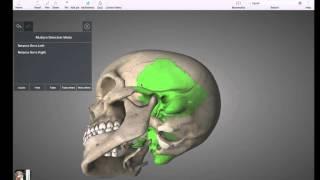 Cranial skull bones