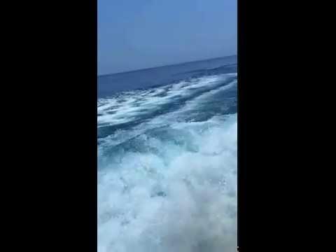 Blue Marlin 032515