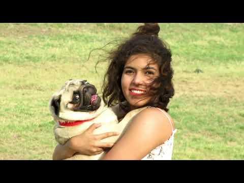 CUTE AND FUNNY PUG DOG / MASTI AND FUN TIME / CHANNEL  THE DOG PUG SHAGGY