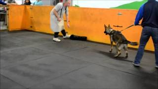 Dog Training In Milwaukee - Pet U Protection Sports Session 1