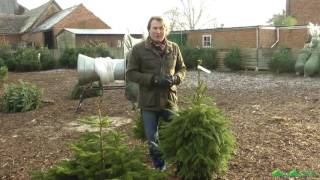 Planting a potted Christmas Tree - David Domoney