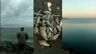РЫБАЛКА на КАРАСЯ в Каховском водохранилище на ФИДЕР с берега