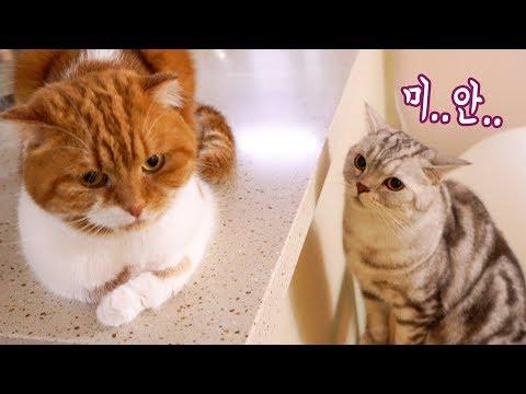 싸우고 나서 아빠에게 사과하는 고양이 _ 노을&소울