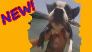 Приколы с животными 2016 Угарный терьер! Приколы с животными и детьми | Top 10