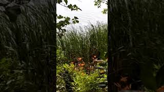Wednesday at the Lake Clip 07/18/2018