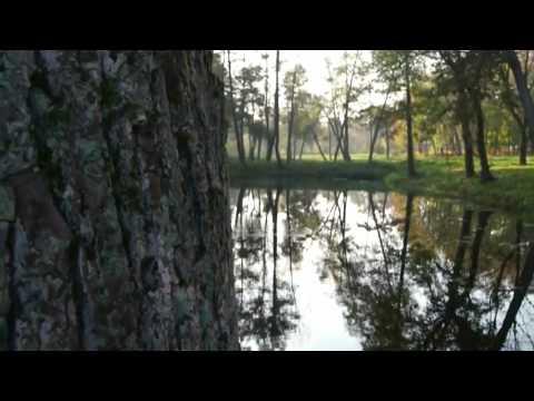 Karunesh - Autumn Leaves